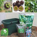 [17年4月中旬予約]小さな緑のカーテン栽培セット(底面給水機能付き):パッションフルーツ パープル(紫玉100)*