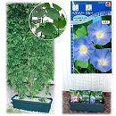 種から育てる緑のカーテン栽培セット:アサガオ・ヘブンリーブルー**