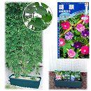 種から育てる緑のカーテン栽培セット:アサガオ混合**