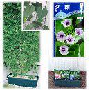 種から育てる緑のカーテン栽培セット:ユウガオ(夕顔)赤花**