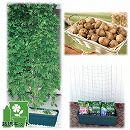 [17年4月中旬予約]苗から育てる緑のカーテン栽培セット:アピオス**