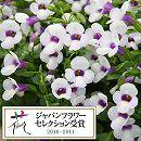 [17年5月中旬予約]夏すみれ:ソラリナホワイトベール3号ポット 24株セット