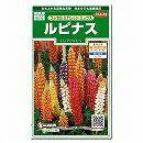 [サカタ 花タネ]ルピナス:ラッセルミナレットミックスの種