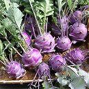 [野菜タネ]コールラビ(紫系)の種