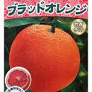 YD(ワイダイ)タロッコ(ブラッドオレンジ)4.5号ポット