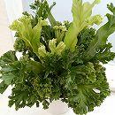 アスプレニウム(アビス):レズリー5号鉢植え