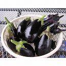 [イタリアの伝統的な茄子 野菜タネ]黒ナス:F1ブラックベルの種