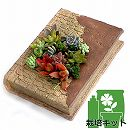 多肉植物用ミニチュア:ピースブック・多肉植物切り芽と土付き