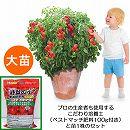 トマト(ミニ):トマト大王(ハンギングトマトミニ)大苗と培養土20リットルと追肥不要の肥料100グラムのセット