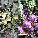 [野菜タネ]コールラビの種:白と紫の2色セット