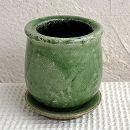 ステララウンド緑SS(直径8cm)・皿付