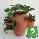 イチゴの栽培セット・ストロベリーポットSと「夏姫」4株