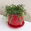 ミカヅキネックレス 陶器鉢植え/ステララウンド赤S(直径11cm)