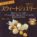 食用ホオズキ:スウィートジュエリースウィートミニ3号ポット 6株セット