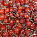[5月上旬頃〜]マイクロトマト:ちっちゃなトマト3号ポット 2株セット