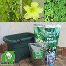 [17年4月中旬予約]小さな緑のカーテン栽培セット(底面給水機能付き):あばしゴーヤ(苦瓜・ニガウリ)*