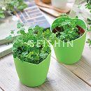 [ギフトに]四つ葉のクローバー栽培セット(ラッピング付)