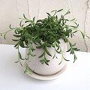 ミカヅキネックレス 陶器鉢植え/ステララウンド白S(直径11cm)
