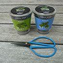 [ギフトに]フレッシュハーブ:バジルとミント栽培セット(底面給水)ミニハサミ付き