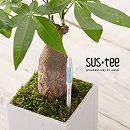 植物用水分計サスティーMサイズホワイト 3本セット