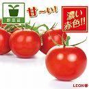 [17年4月中旬予約]高リコピントマト:LEON(レオン)3号ポット