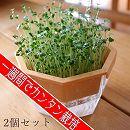 スプラウト栽培キット:チアシード&ブロッコリー(各1セット)