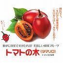 タマリロ(トマトの木)3.5号ポット
