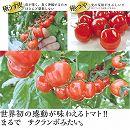 [17年4月中旬予約]トマト:甘〜くとろけるトマトつやぷるん3号ポット