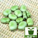 そら豆(ソラマメ)の苗:サヌキ長莢2.5号ポット