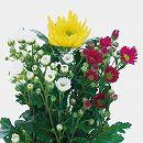 お盆用お供え菊ミックス植えタイプ1(黄大輪入り)4号ロングポット