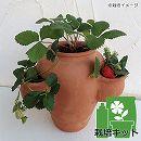 イチゴの栽培セット・ストロベリーポットSと「アイベリー」4株(土・肥料付き)