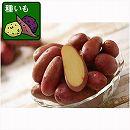 ジャガイモ:タワラヨーデル500g入り5袋セット