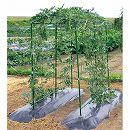 空中栽培つる棚セット