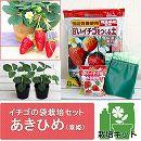 イチゴの袋栽培セット:ベルポットとイチゴ苗/あきひめ(章姫)
