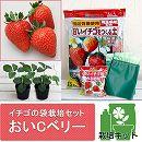 イチゴの袋栽培セット:ベルポットとイチゴ苗/おいCベリー