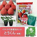 イチゴの袋栽培セット:ベルポットとイチゴ苗/とうくん(桃薫)