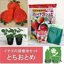 イチゴの袋栽培セット:ベルポットとイチゴ苗/とちおとめ