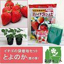 イチゴの袋栽培セット:ベルポットとイチゴ苗/とよのか(豊の香)