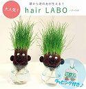 [ギフトに!]hair LABO(ヘアーラボ)底面給水タイプ:2個セット(ラッピング付き)/丸顔と長顔