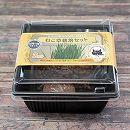 ねこ草栽培セット