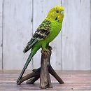 小鳥のオーナメント:インコ小イエローグリーン