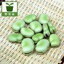 サラダそら豆(ソラマメ)3号ポット 6株セット