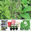 バジル苗3種栽培セット(BKFポット(受け皿)・土肥料付き)