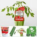 トマトのかんたん栽培セット:GABAリッチトマト