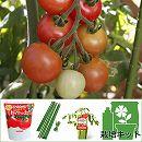 トマトのかんたん栽培セット:ちいさなももこトマト
