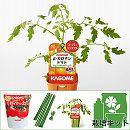 トマトのかんたん栽培セット:ベータ(β)カロテントマト