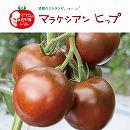 イタリアントマト:マラケシアンヒップ3号ポット 24株セット