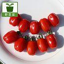 高糖度薄皮ミニトマト:コンフェット3号ポット 2株セット