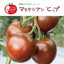 イタリアントマト:マラケシアンヒップ3号ポット 6株セット