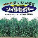 [2アール分 春、秋まき タネ]牧草種子:エン麦 ソイルセイバーオーツ 1kg